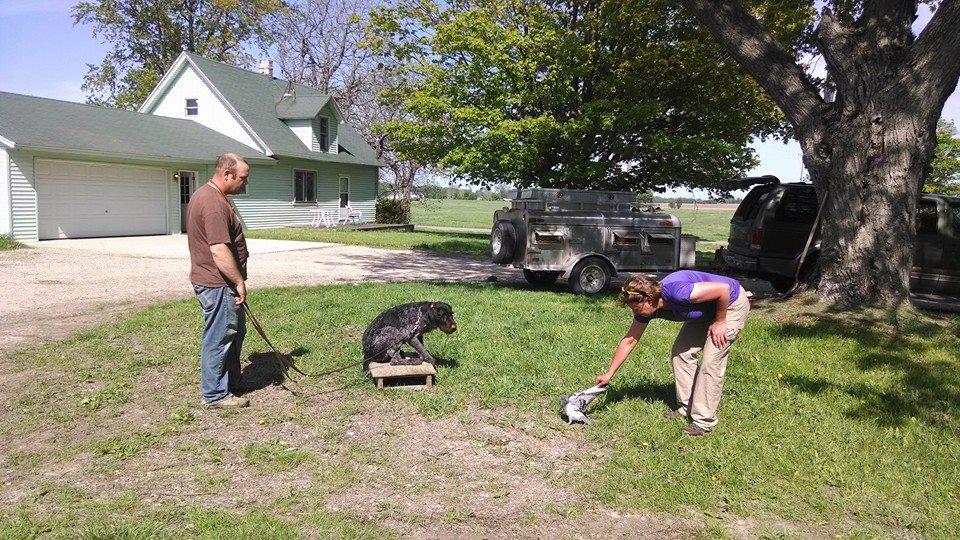 Dog Kennel Rockford Mi